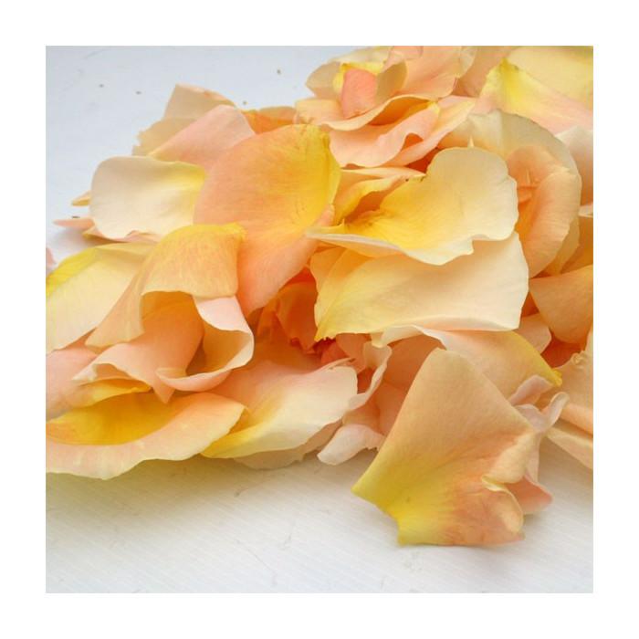 Pétales de roses frais jaunes