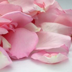 Pétales de roses frais roses