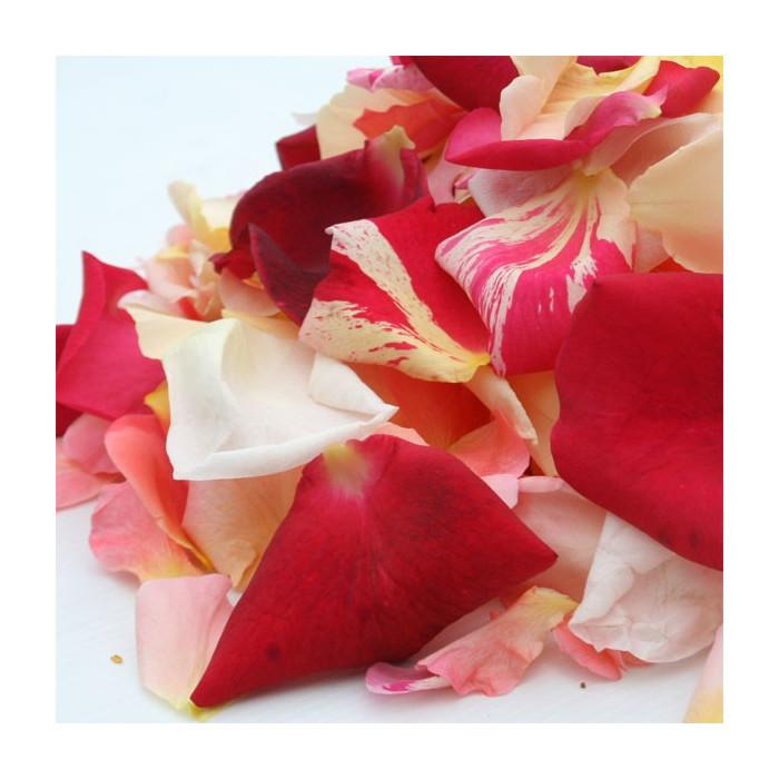 Pétales de roses multicolores