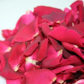 Pétales de roses frais rouges