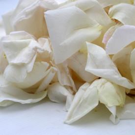 Pétales de Roses frais Blanc