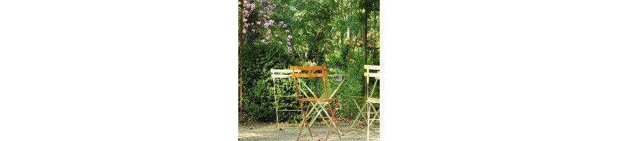 Commandez vos Rosiers Couvre-sol avec Petales-de-roses.com