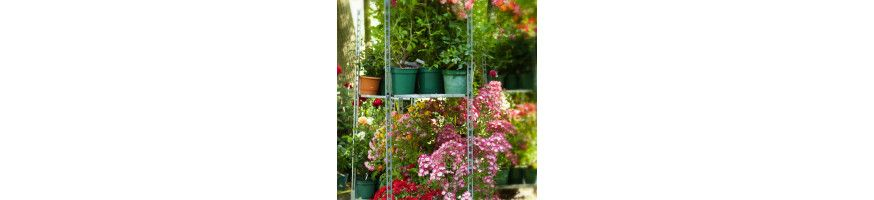 Patio / Miniature roses ! Producer | The specialist of rosebushes