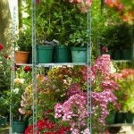 Patio / Miniature Roses