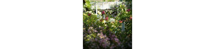 Petales-de-roses.com Creations