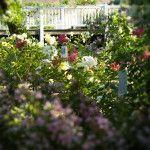 Les Créations Pétales-de-roses.com